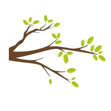Saremo alberi
